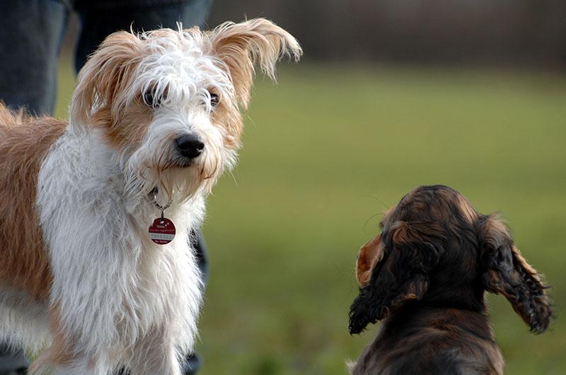 Bumsen hunde Der leckende